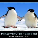 demotywatory-pingwiny to jaskóli-350x200