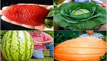 OdchudzanieJestProste_gigantyczne-warzywa-owoce-350x200