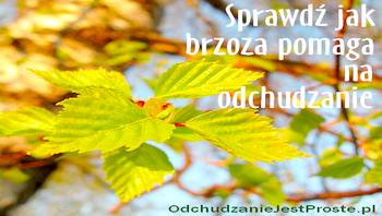 OdchudzanieJestProste.pl-brzoza-drzewo-liscie-na-odchudzanie