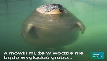 Odchudzaniejestproste.pl-odchudzanie-na-wesolo