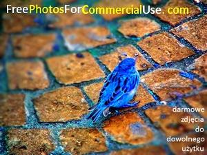 FreePhotosForCommercialUse.com-darmowe zdjęcia-pobierz i użyj