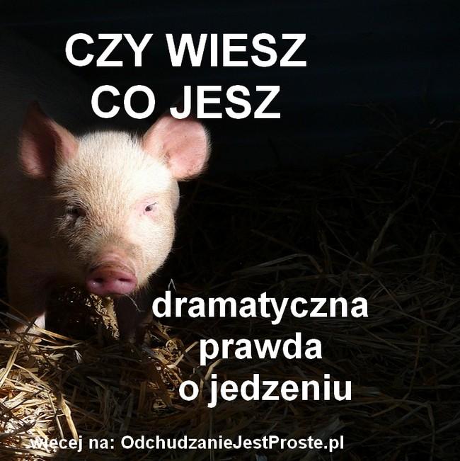 OdchudzanieJestProste.pl-drastyczne-prawda-o-jedzeniu-czy-wiesz-co-jesz